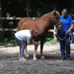 Den Pferdekörper erfühlen lernen